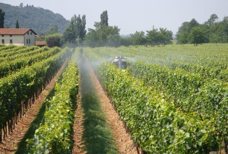Pulverisateurs-Vignobles en espalier-Portés-Fast 55 Lt 400 –  Lt 600