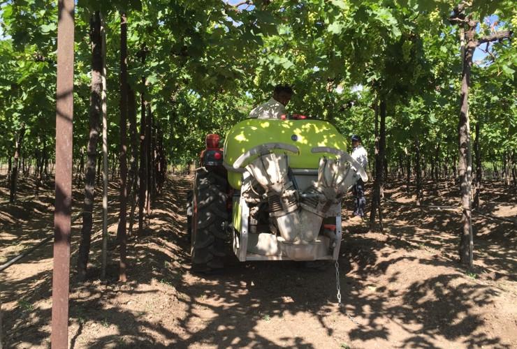 Pulverisateurs-Vignobles en espalier-Portés-Nm 200